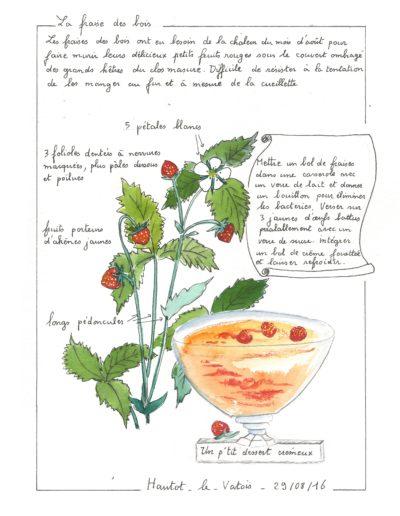 La fraise des bois
