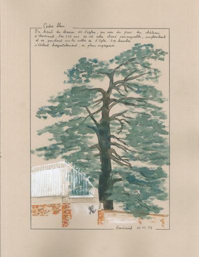 Cèdre bleu - Amécourt
